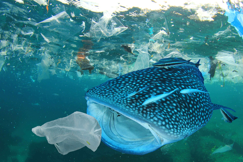loại bỏ rác thải nhựa